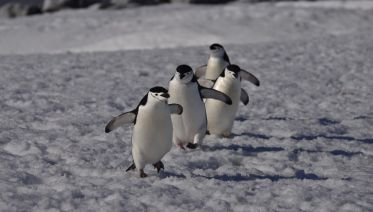 Antarctica Classic Itinerary