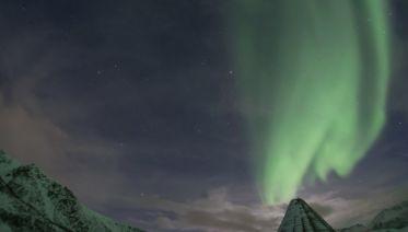 Arctic Lights & Whales