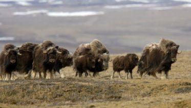 Arctic Watch Wilderness Lodge - 10 Days
