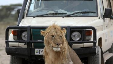 Awesome Tanzania Luxury Safari