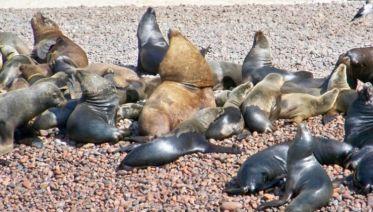 Ballestas Islands & Paracas National Reserve Day Trip (from Paracas)