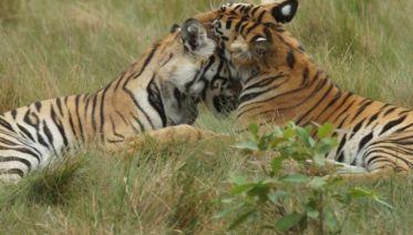 Bandhavgarh Tiger Experience 3D/2N