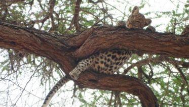 Baobab Safari 5D/4N (Serengeti, Ngorongoro, Lake Manyara & Tarangire)
