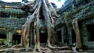 Beng Mealea Half Day Tour From Siem Reap