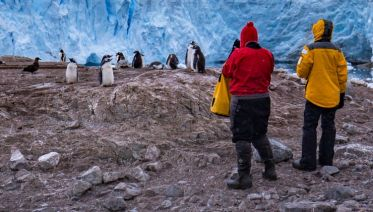 Best of Antarctica and the Falklands