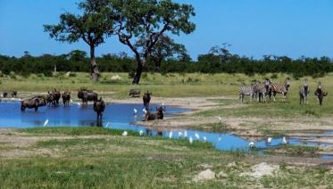 Best of Botswana Safari 7D/6N