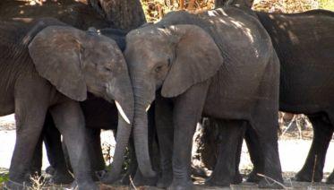 Best Of Botswana Safari 9D/8N