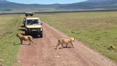 Best Of Tanzania High-End, Luxury Safari Tour