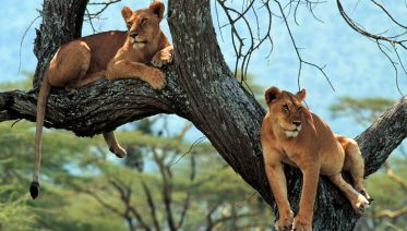 Best of Tanzania: Northern Circuit in Six Days