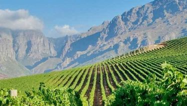 Best of the Cape Winelands - Stellenbosch