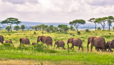 Best Serengeti and Ngorongoro Crater