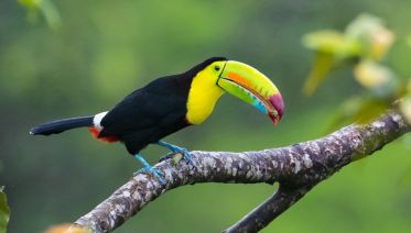 Bird-Watching Tour Around Lake Arenal