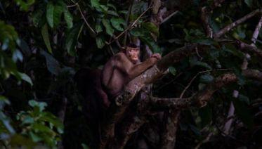 Borneo – East Sabah Adventure