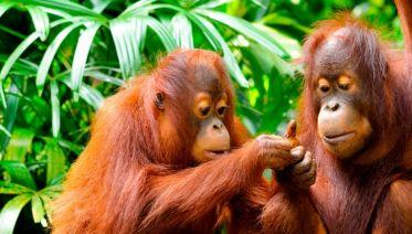 Borneo Family Holiday Comfort