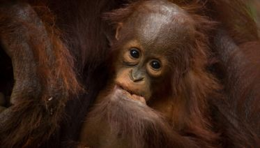 Borneo Wildlife Discoverer