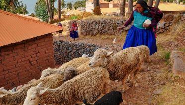 Bossa Nova Ways (from Cuzco)