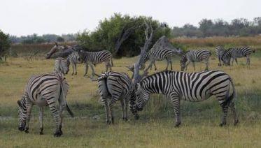 Botswana and Zimbabwe Explorer