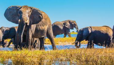 Botswana Delta Experience