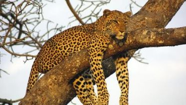 Botswana Leopard Trail & Kalahari
