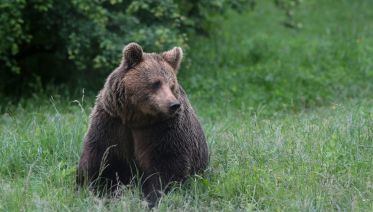Bulgaria: Realm of the Brown bear