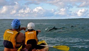 Byron Bay Kayak Experience