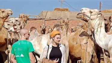 Cairo Tours - Visit Camel Market In Cairo