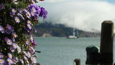 California Life Ways (from San Francisco)