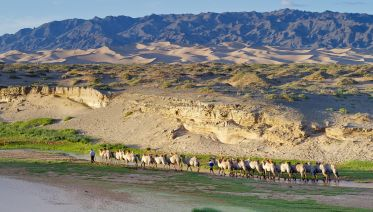 Camel Safari in South Gobi