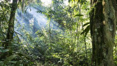 Camino Verde Jungle Trek