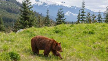 Canada Wildlife & Vancouver Island