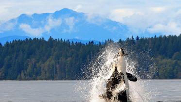 Canadian Rockies & Vancouver Island