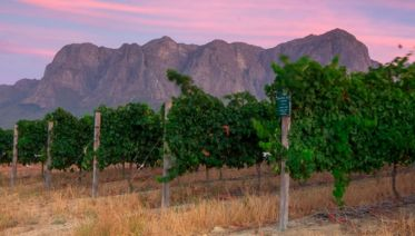 Cape Town & Winelands
