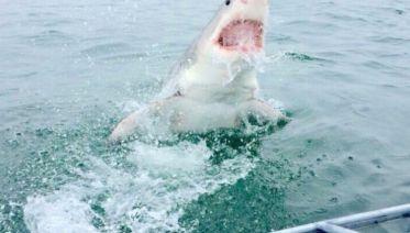 Cape Town Great White Shark Adventure 4D/3N