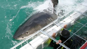 Cape Town Great White Shark Adventure 4D/3N