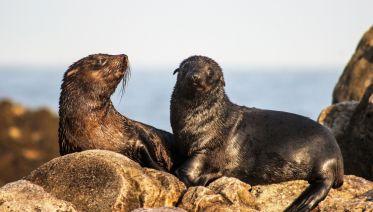 Cape Town Marine Ecotour 3 Days