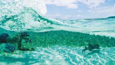 Caribbean Encounter