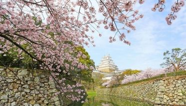 Cherry Blossom Japan: 9 Days from Tokyo to Hiroshima
