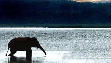 Chiang Mai & Elephants