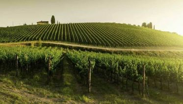 Chianti Half Day Afternoon Tour from Lucca