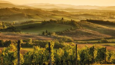 Chianti Half Day Tour from Lucca