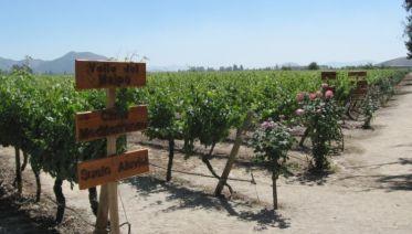 Chilean Wine Escape 4D/3N