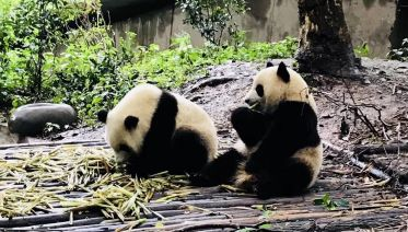 China Panda Small Group Tour: 11 Days