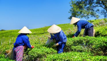 Chinese Tea Culture and West Lake Tour