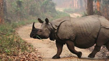 Chitwan National Park Extension