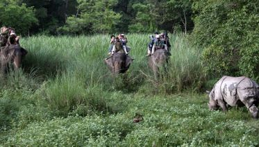 Chitwan National Park Safari