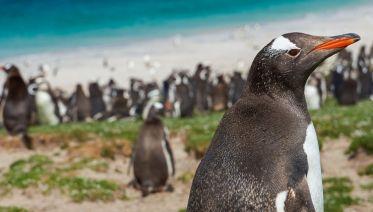 Christmas & New Year in Antarctica, South Georgia & Falklands