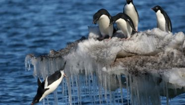 Christmas in Antartica & the Weddell Sea