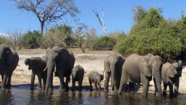 Classic Bush Safari Adventure In Tanzania
