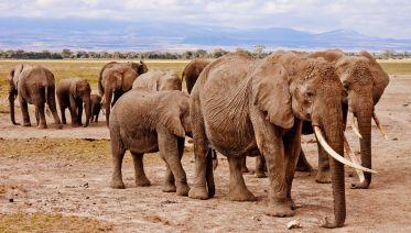 Classic Kenya Wildlife Safari Trip