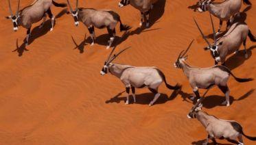 Classic Namibia
